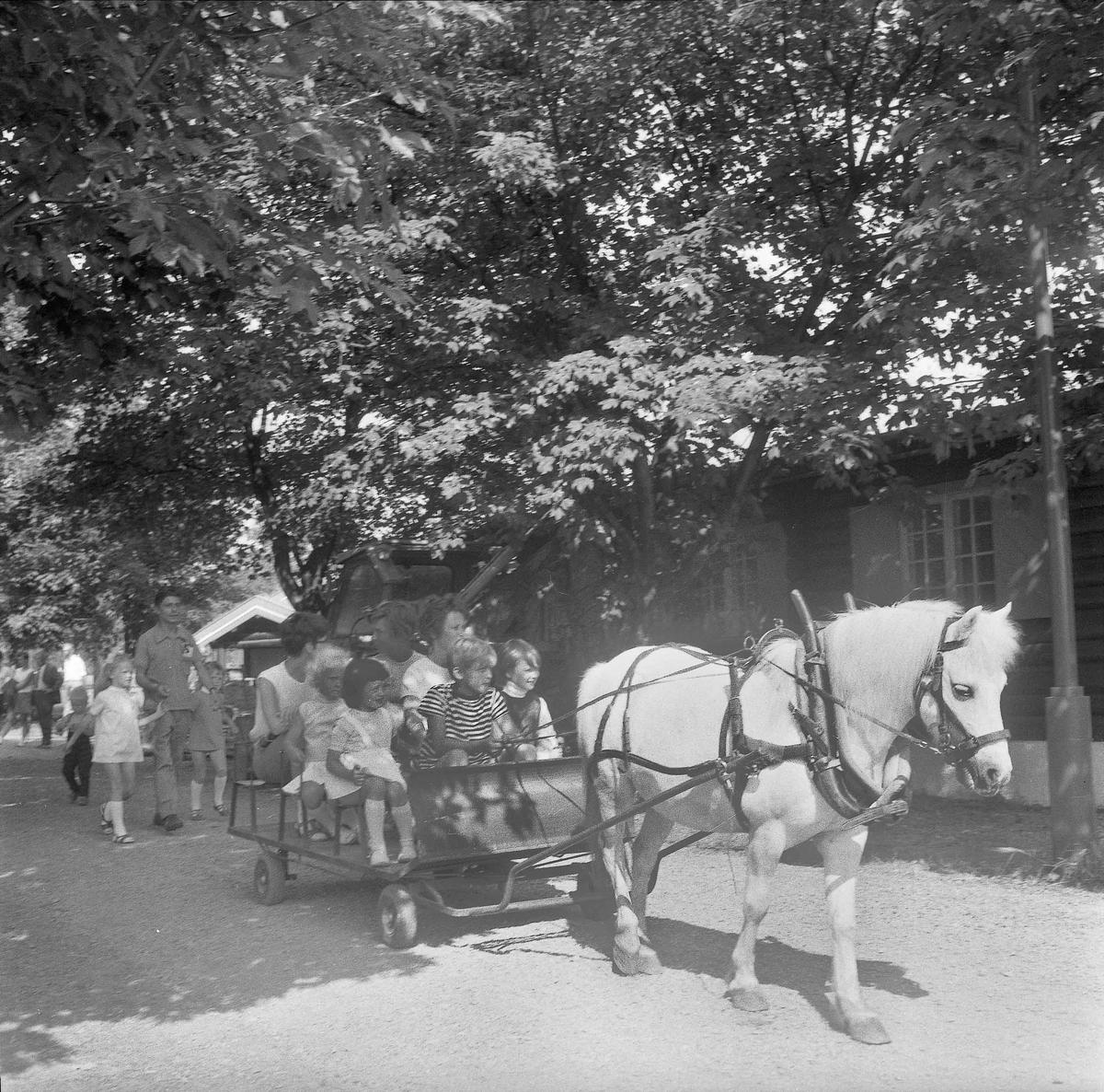 Barn kjører hest og vogn.