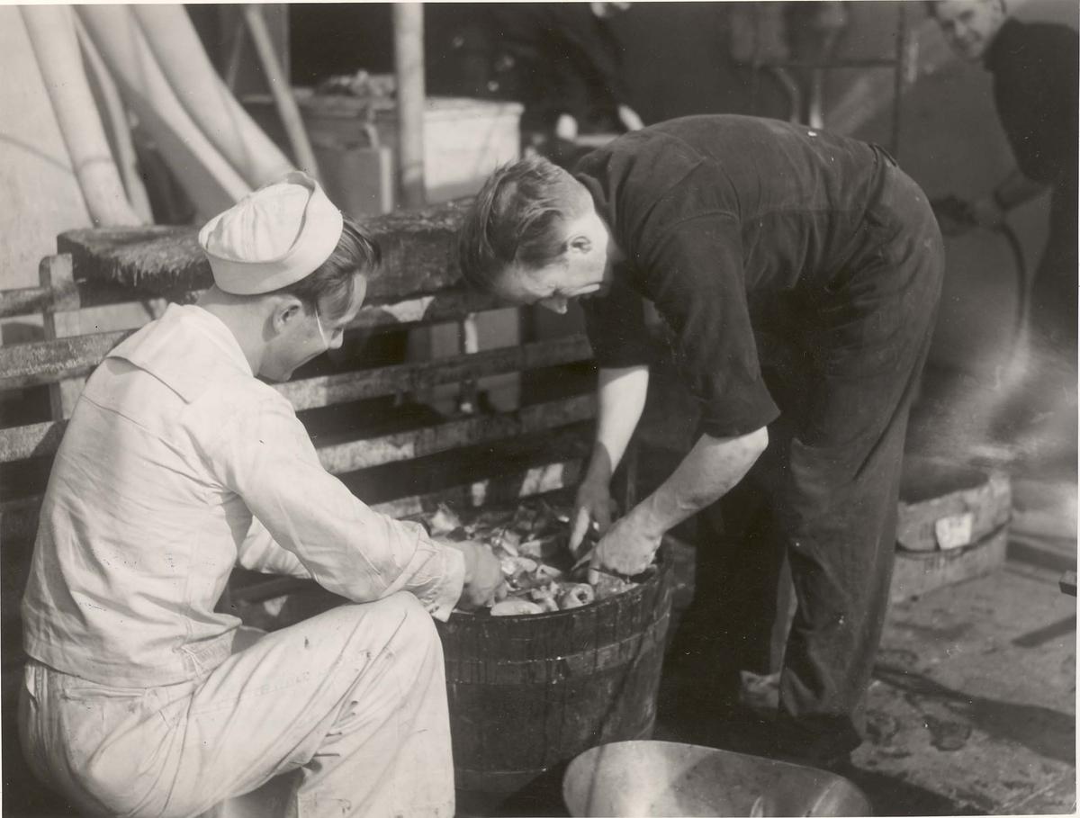 """Jageren  """"Glaisdale"""" , livet om bord under 2. VK. Fisk er samlet inn til middag etter detonasjon av dypvannsbombe og renses før den tilberedes."""